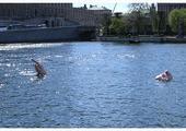 To jedna z atrakcji turystycznych na kanałach Sztokholmu.