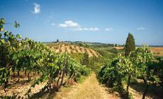 Winnice są nieodłącznym elementem krajobrazu Toskanii