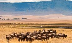 Safari w Tanzanii - Serengeti