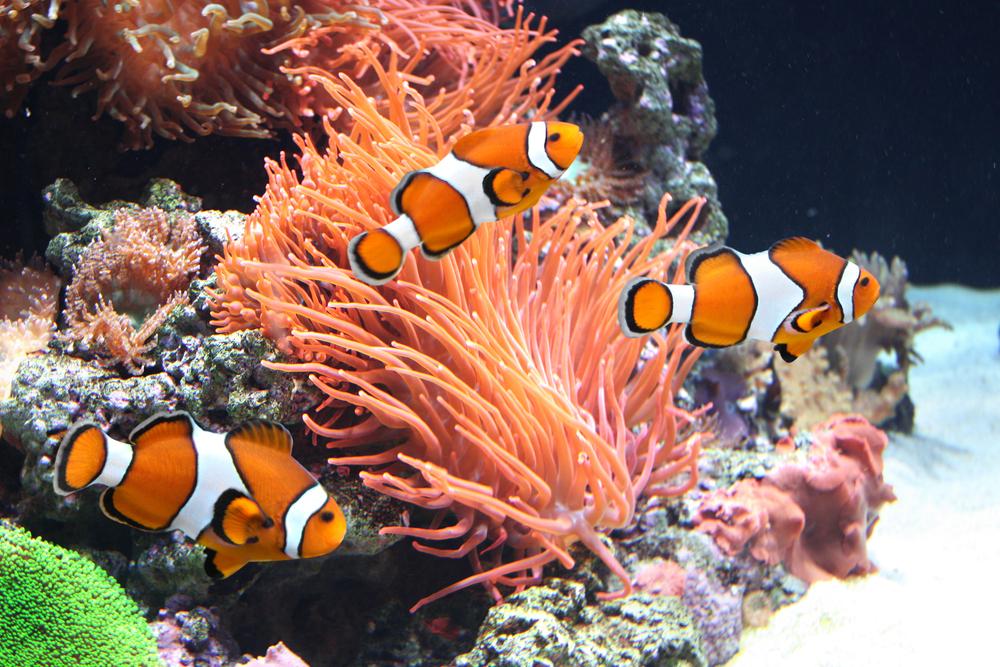 Gdynia atrakcje: akwarium